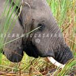kwetsanicampokavango12